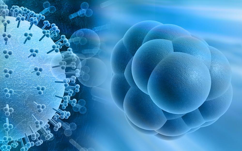 Цитомегаловирус: анализ крови, профилактика, диагностика, лечение